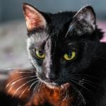 Може би не знаете защо котката ви мърка